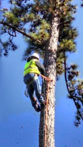 tree removal in houston