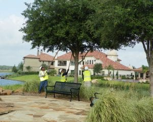 tree service houston tx
