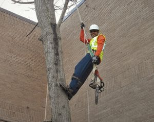tree trimming in houston